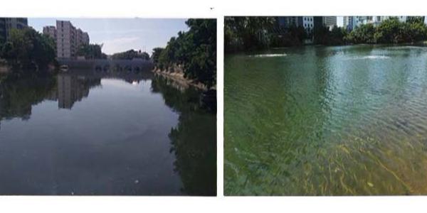 鸭尾溪:从曝光河到点赞河