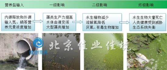 藻类爆发过程示意图