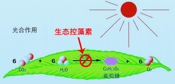 生态制剂除藻类原理示意图