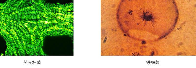 黑臭水体中微生物的来源有哪些?