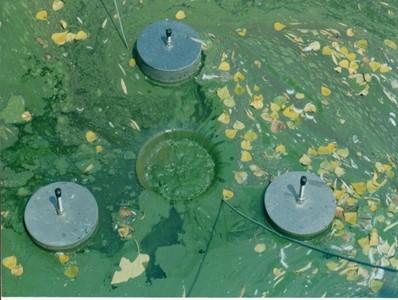 河道蓝藻水华、浮萍治理